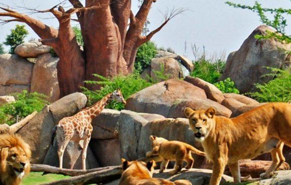 二十一世纪的动物园