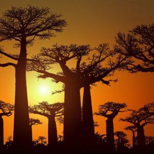 马达加斯加,正在开发的旅行目的地